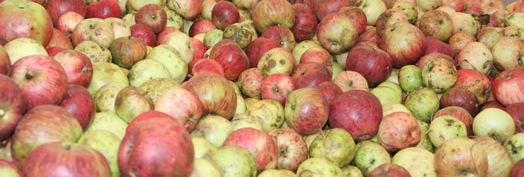 Oktober 2012 - Kraft durch Saft , die Apfelsaftaktion